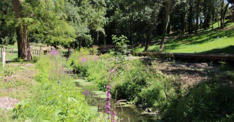 Image : parc val d'asson - Montaigu-Vendée