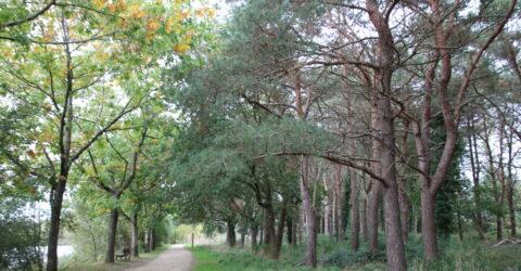 Illustration : abattage arbres à Montaigu-Vendée